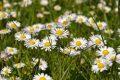 S příchodem jarního počasí se navyšuje počet nabízených ojetin